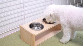 大事な愛犬・愛猫に!体に合った高さの食器台を作ろう!Pet Food Table DIY