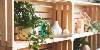 観葉植物を部屋のインテリアに!おすすめの植物とシチュエーション別のポイント