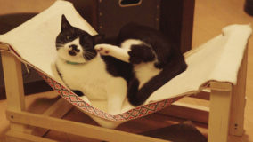 [猫×DIY]ネコ用ハンモックを手作り!Cat hammock DIY
