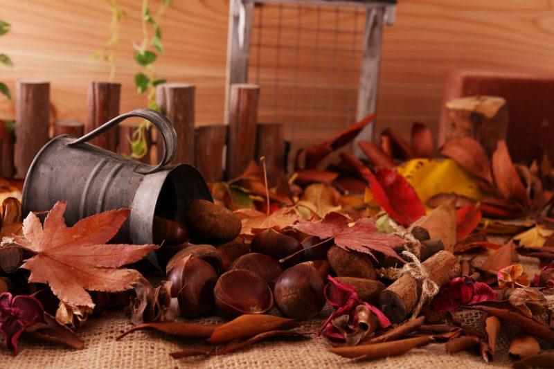 食卓には木の実や草を飾るのがおすすめ