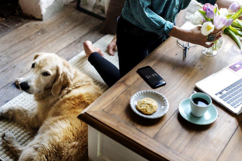 愛犬のためのインテリアルール