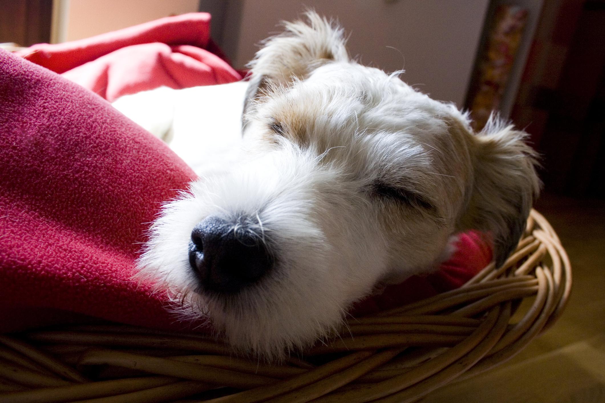 愛犬のためのくつろぎスペース