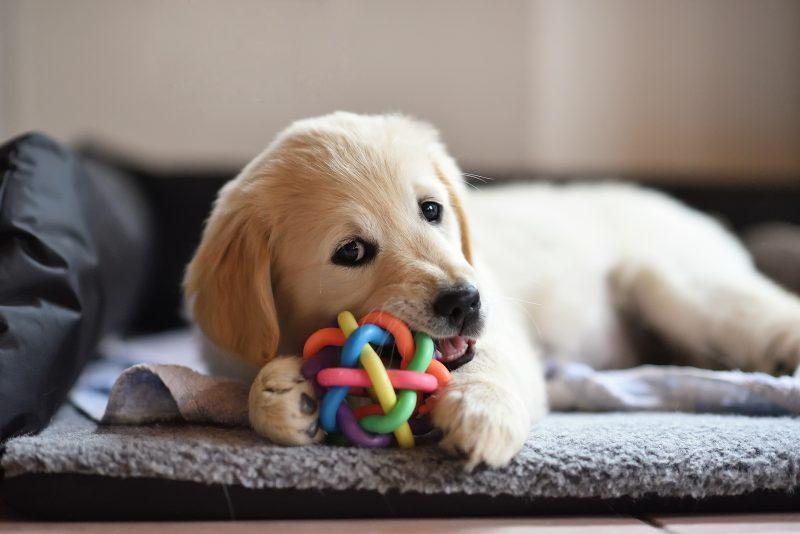 愛犬のための収納とフードテーブル