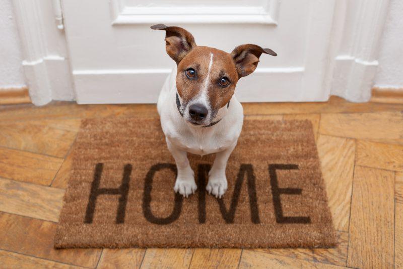 簡単に玄関の印象を変えてくれる「玄関マット」