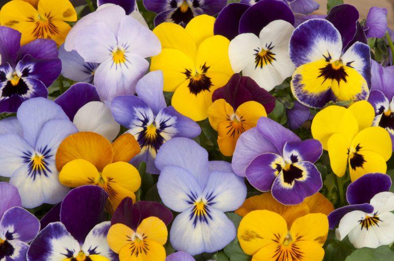 冬花で「寄せ植え」を楽しむ