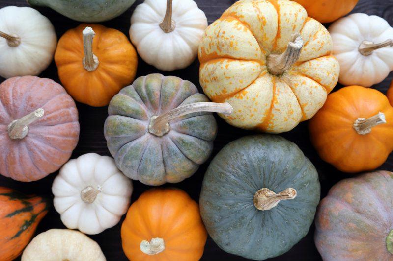 実はカラーバリエーション豊富なかぼちゃ