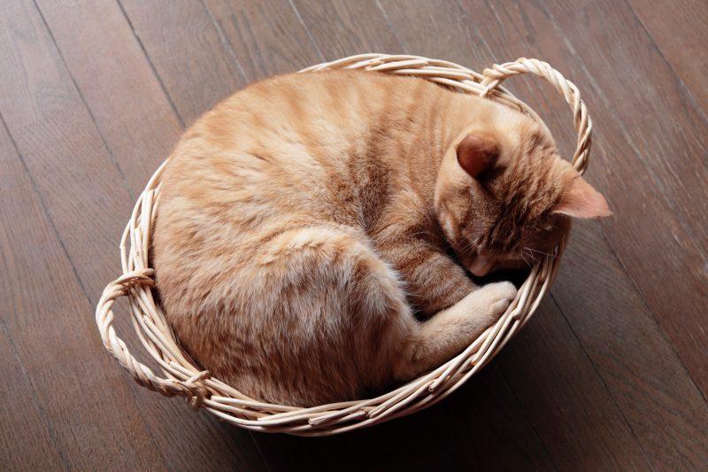 籐のカゴにクッションを敷した猫用ベッド