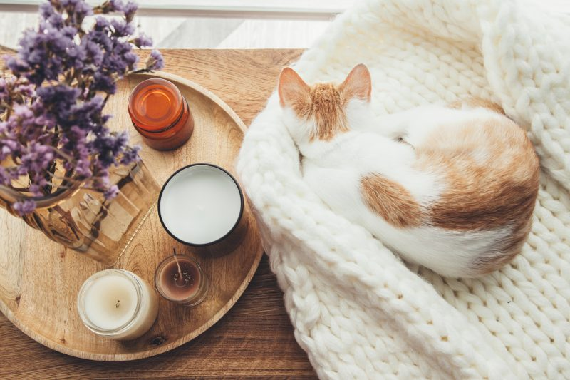 冬使用の猫用ベッド
