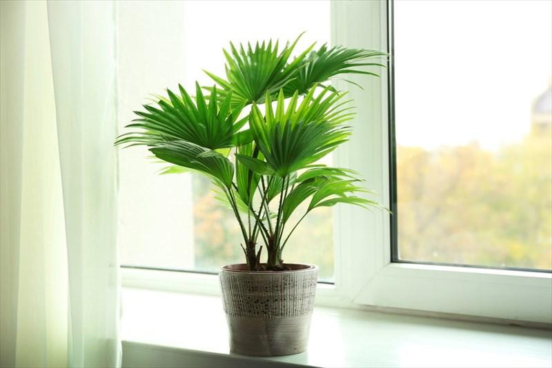 熱帯系の植物なので元気な印象