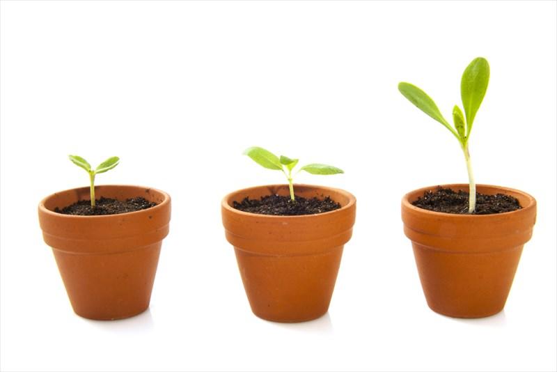 植木鉢の代表格といえる茶色の鉢