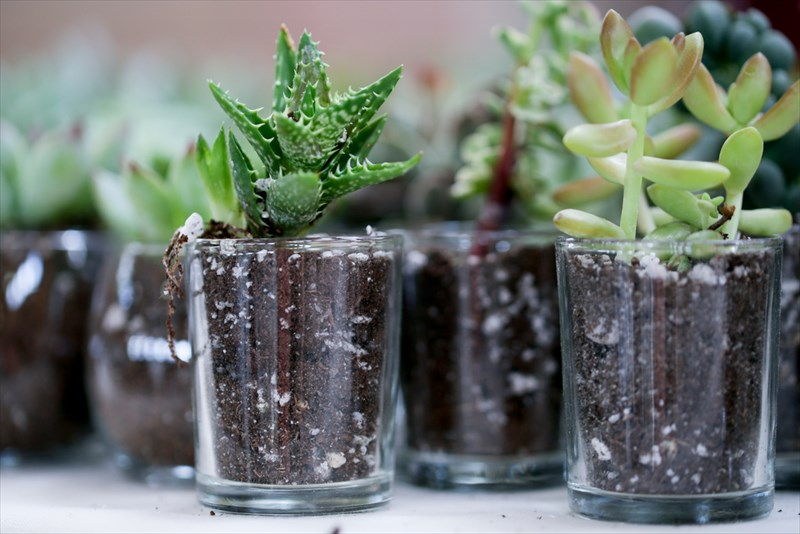 土の色にもこだわれるガラス鉢