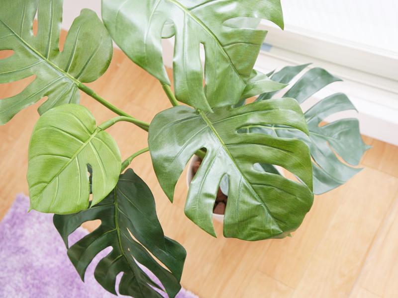 植物の形もインテリアには重要