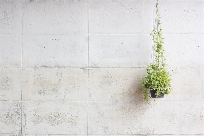 空間を上手に生かして植物を飾りましょう