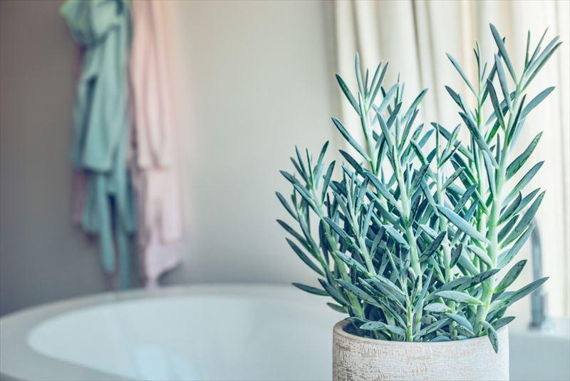 淡い色の観葉植物