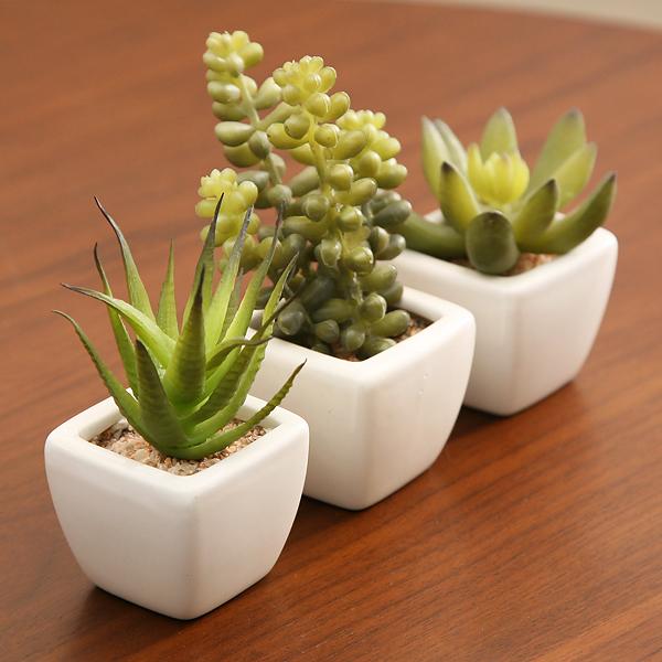 簡単に育てられる光触媒観葉植物
