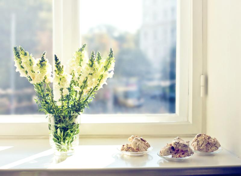 お気に入りの観葉植物