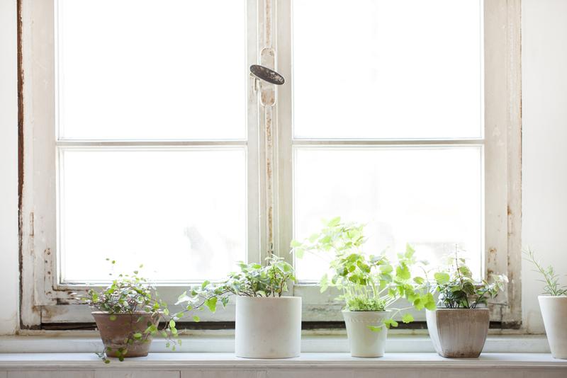 きれいな空間を演出する観葉植物
