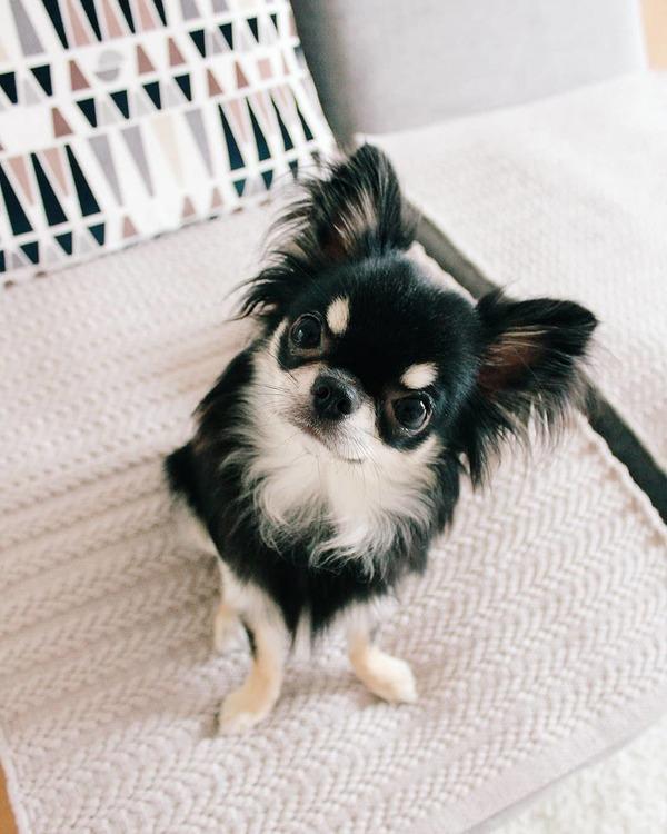 愛犬のさくらちゃん