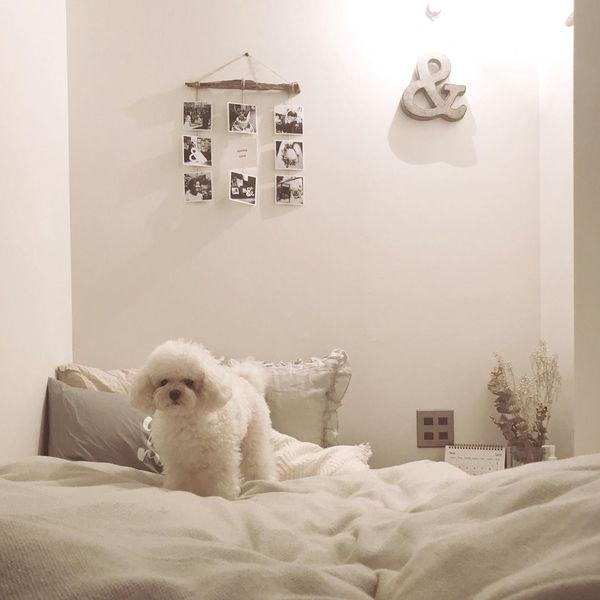 グレーと白でまとめられたベッドルーム