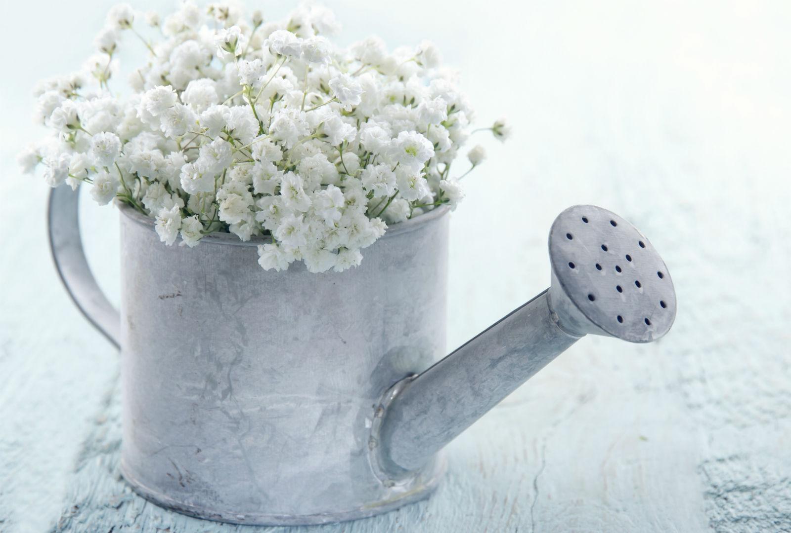 銀色のじょうろに白い花が生けられているイメージ。