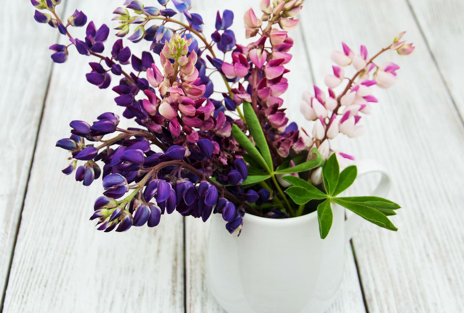 白いマグカップに紫とピンクの花が生けられているイメージ。