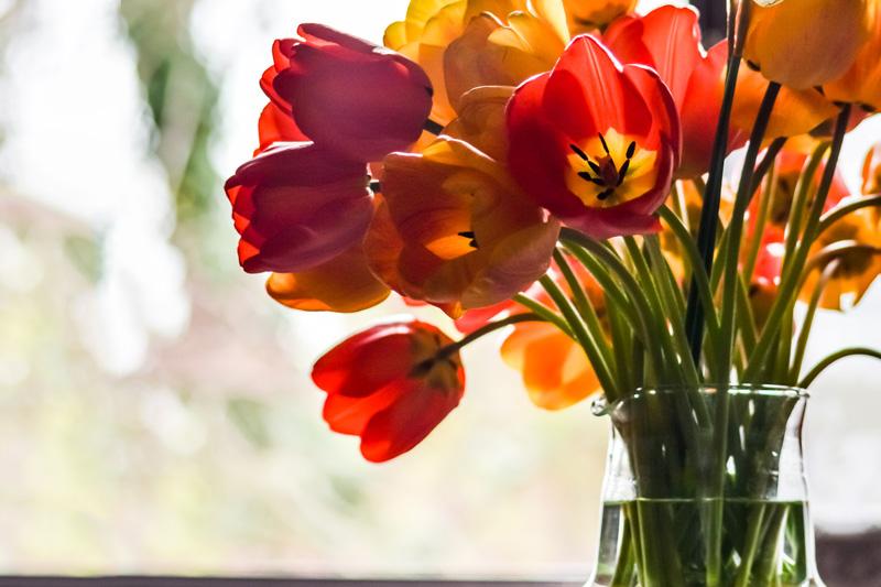 春の花を窓辺に飾ろう