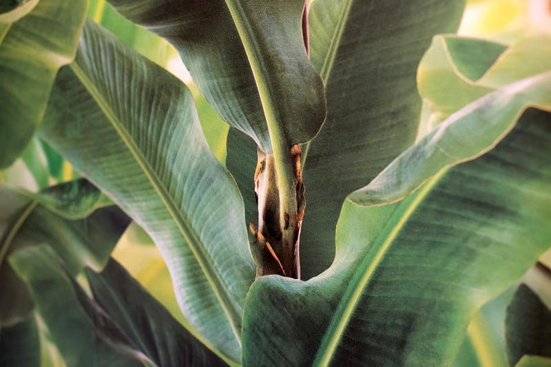 リアルな植物柄