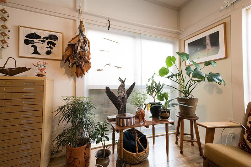 観葉植物とコレクション