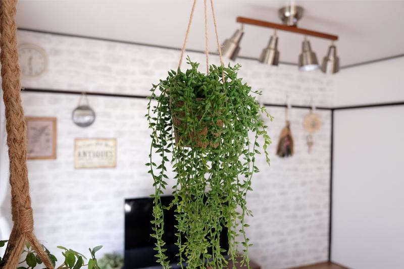 リビングの観葉植物