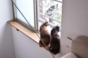 飼い主とともに暮らしを楽しむ猫ちゃんたち