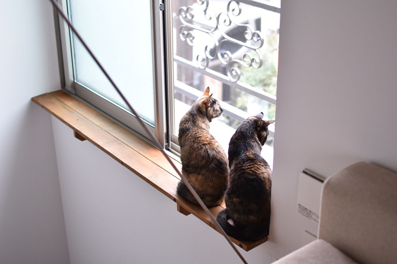 窓から外を見つめるペット
