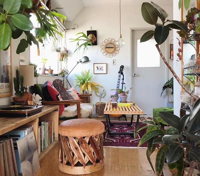 植物が多く飾られた部屋
