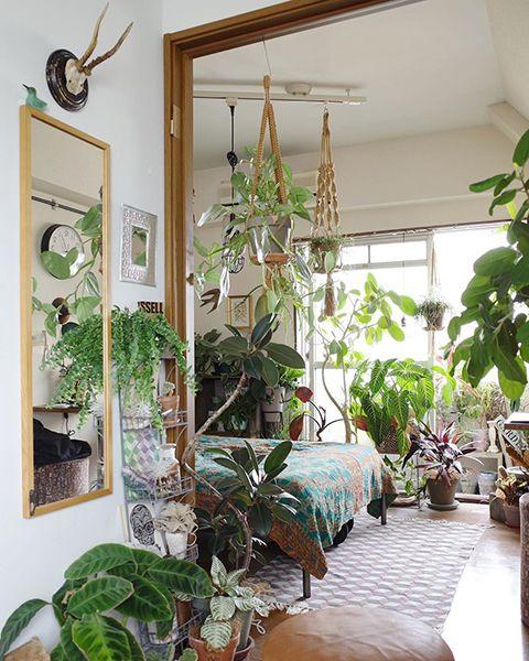 植物だらけの部屋