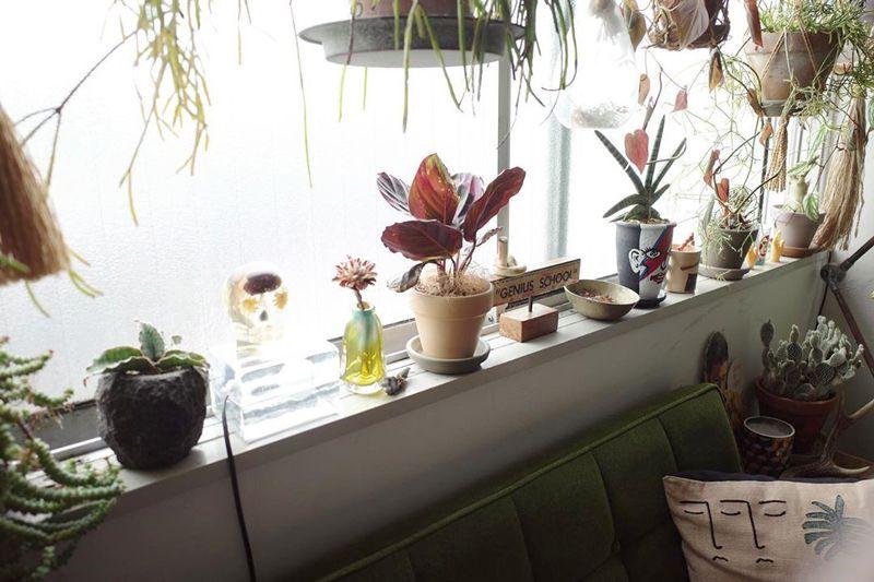窓辺に置いた植物