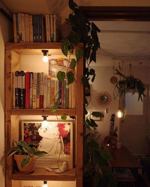 本棚には蔓タイプの植物