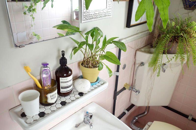 お風呂周りにはシダ系植物