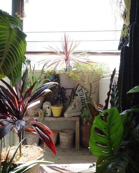 ベランダと植物