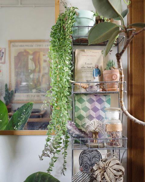 ラックの収納と植物