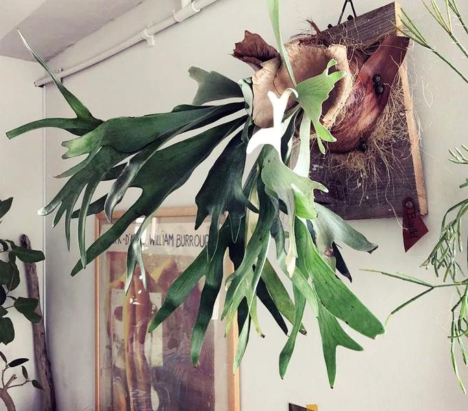 壁に飾った観葉植物