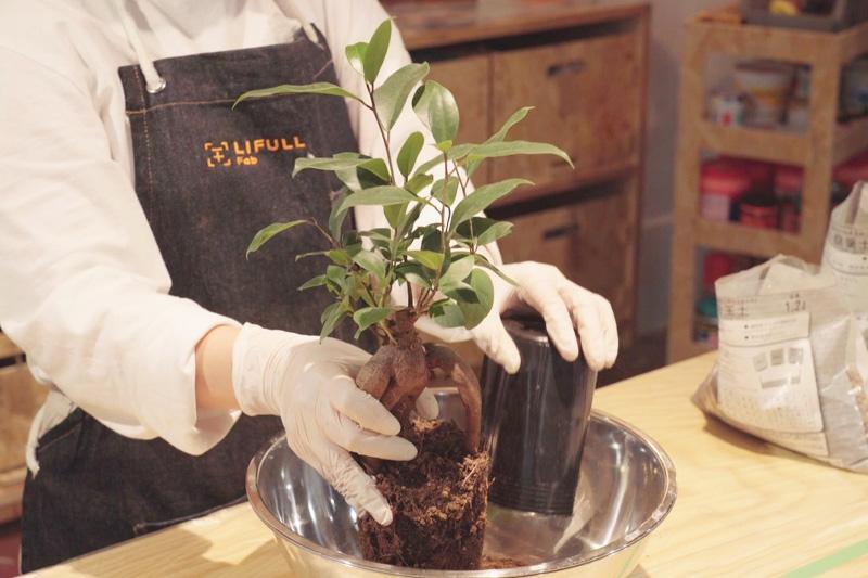 カップから植物をだす