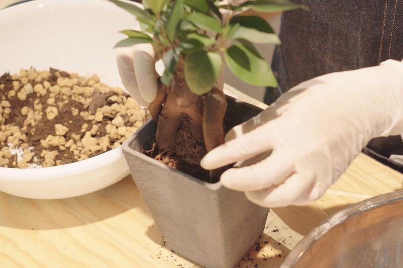 植物を入れる