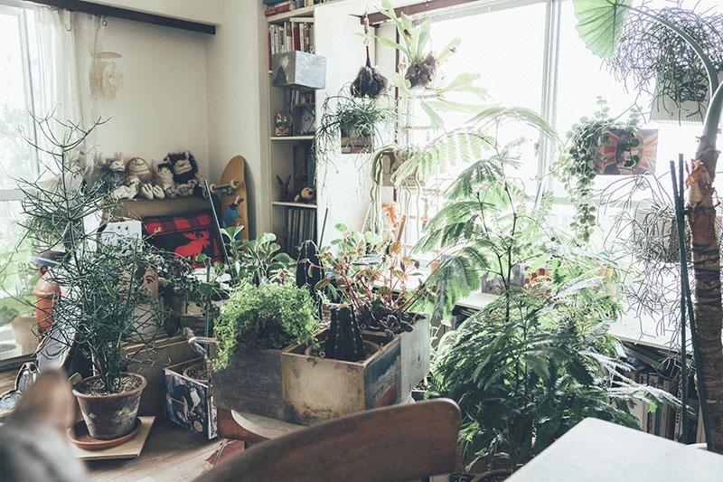 ベンジャミンやガジュマル、サボテンなどの植物