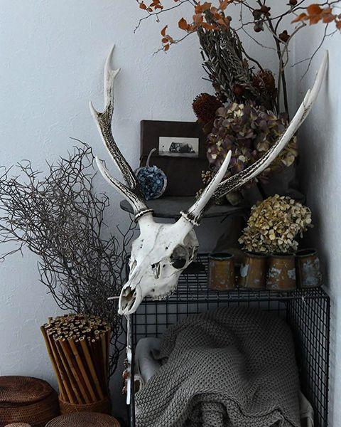 目を引く鹿の頭蓋骨オブジェ