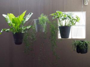 ベランダに吊るした植物たち